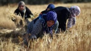 المرأة العربية ما بين المشاركة الاقتصادية والتهميش الحقوقي
