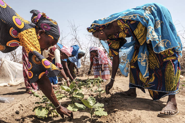نساء يعملن في حديقة نباتية بقرية ندياما بوله، السنغال/ منظمة الفاو