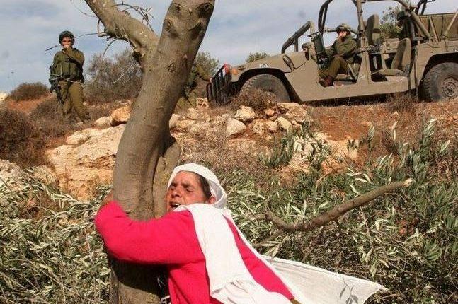 المرأة الفلسطينية في مواجهة الاحتلال الإسرائيلي/ WAFA