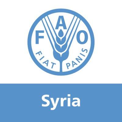 منظمة الفاو/ سوريا